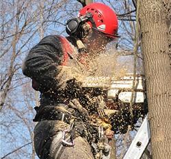 Профессиональный спил деревьев в Самаре. Обрезка деревьев. infrus.ru